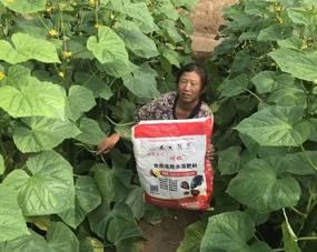 新疆哈密的黄瓜大棚全程冲阔钛冲施肥减少病害,壮苗增产,大姐为阔钛冲施肥代言!