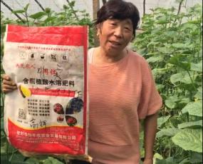 中牟县官渡镇李南溪村用户使用阔钛水溶肥7天效果:瓜果直,坐果多,7分地摘了500多斤,隔一天摘一次。
