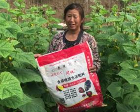 哈密用户使用阔钛水溶肥在黄瓜上的表现,得到用户的大力肯定,一天摘400多斤。