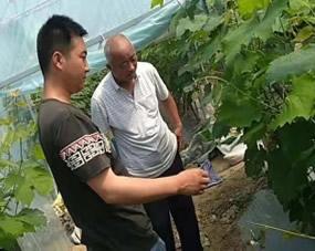 果树专家田间指导服务