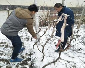 冬日严寒我们王专家为农户讲解果树技术